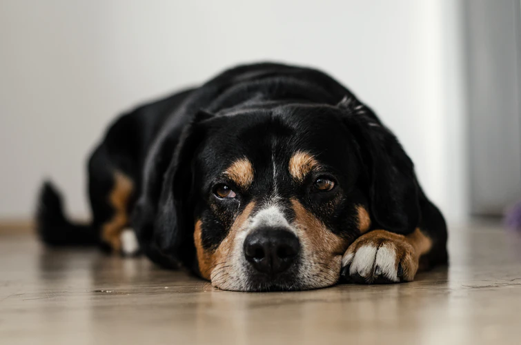 CBD As Dog Supplements: Are They Effective